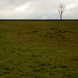 Lone tree and a green field Stock Photos