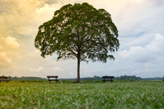 Lone tree in green meadow have bench both sides them blue sky an Royalty Free Stock Photography