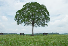 Lone tree in green meadow have bench both sides them blue sky an Royalty Free Stock Photos
