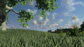 Lone tree on green meadow, time lapse clouds, stock footage. Video stock video