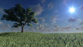 Lone tree on green meadow and time lapse clouds, stock footage. Video stock video