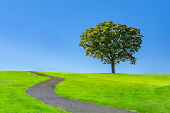 Lone tree on a green meadow. Under a clear blue summer sky stock photos