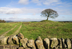 Lone tree on Grindon Moor, Derbyshire. Single tree on Grindon Moor, Derbyshire, England with dry stone wall in foreground and cart track leading into distance Stock Photography