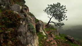 Lone tree growing out of mountainside. Video of lone tree growing out of mountainside stock video footage