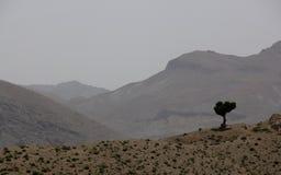 Lone Tree Stock Image