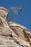 Lone Tree in Rock. A lone tree growing in solid rock Royalty Free Stock Photos