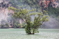 Lone tree grows at Railay Beach in Krabi,  Thailand Royalty Free Stock Image