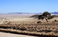 Lone tree in the harsh desert. Lone tree in the harsh Namib desert royalty free stock photos