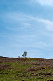 The Lone tree on a hill. Against blue sky Stock Photography
