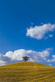 Lone tree hill. A lone tree stands on top of a hill Stock Photo