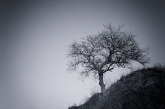 Lone tree on a hill Stock Image