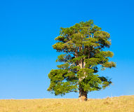 Lone tree on a hill Stock Photography