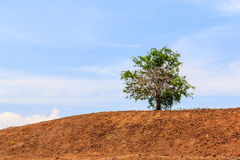 Lone tree on hill. Lone tree on brown hill with blue sky Royalty Free Stock Photography