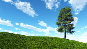 Lone tree on hill of green grass Stock Photography