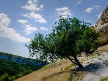 A lone tree on a hill. A lone tree growing on a rocky hill Stock Image