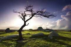 Lone tree on hill Stock Photo