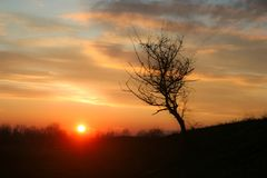 Lone tree on a hill silhouetted against a pastel colored sky at sunset in Romania royalty free stock images