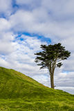 Lone tree on a hill Stock Photo