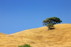 Lone tree on a hill under clea Royalty Free Stock Photo