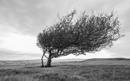 Lone tree on a hill Royalty Free Stock Images