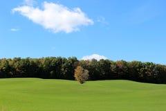 Lone tree i en grön grön äng Arkivfoto