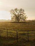 Lone tree i fält Fotografering för Bildbyråer