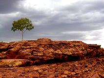 Lone tree i stenig liggande Arkivfoto