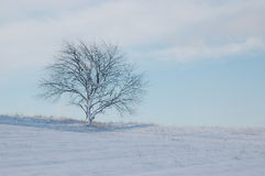 Lone tree i vinter royaltyfri bild
