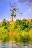 Lone tree. Image of an old bare tree by the lake at sunset Royalty Free Stock Photos