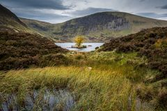 Lone Tree In Loch Skeen Stock Photography