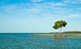 Lone Tree on Island Stock Images