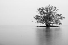 Lone tree on island Stock Photography