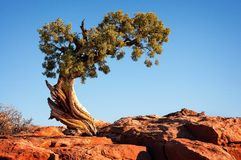 Lone tree Royalty Free Stock Image