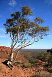 Lone Tree - Kings Canyon Royalty Free Stock Photo