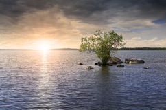 Lone tree on the lake Stock Images