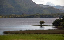 Lone tree on Lake Leane at Killarney on the Ring of Kerry in Ireland. IRE royalty free stock photography