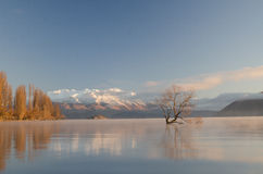 Lone tree Stock Photo