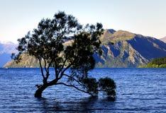 Lone tree Lake Wanaka. NZ Royalty Free Stock Photo