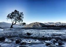Wanaka Tree. Lone tree of Lake Wanaka Stock Image