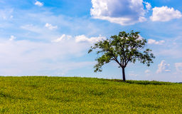 Lone tree landscape Stock Photography