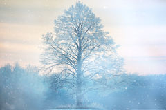 lone tree landscape frost Royalty Free Stock Photography