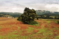 Lone tree. Landscape with tree. Northern Navarra Stock Photos