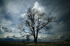Lone tree without leaves Stock Image