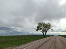 Lone tree on a lonely road. Royalty Free Stock Photos