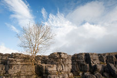 Lone tree Malham Cove in Yorkshire Dales National Park Royalty Free Stock Photo