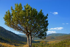 Lone tree in meadow Royalty Free Stock Image