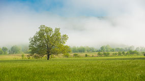 A lone tree Great Smoky Mountain National Park Stock Images