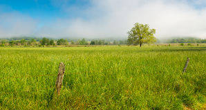 A lone tree in a meadow Great Smoky Mountain National Park Stock Images