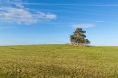 A lone tree on a meadow. Morning sky and condensation traces of planes. Royalty Free Stock Photography