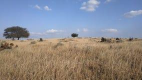 A lone tree in meadows. Lone tree meadows grass trees bush plateau plain grassy livestock dry land royalty free stock photo